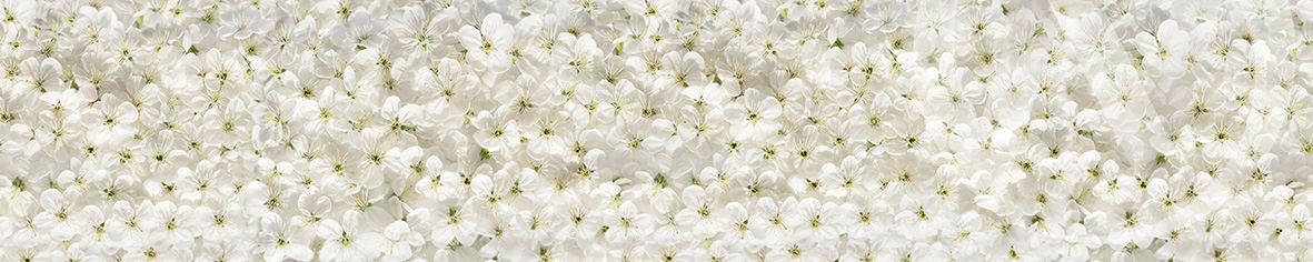 Панель декоративная ХДФ 610*2440*3,2 Цветки вишни  фф(270)