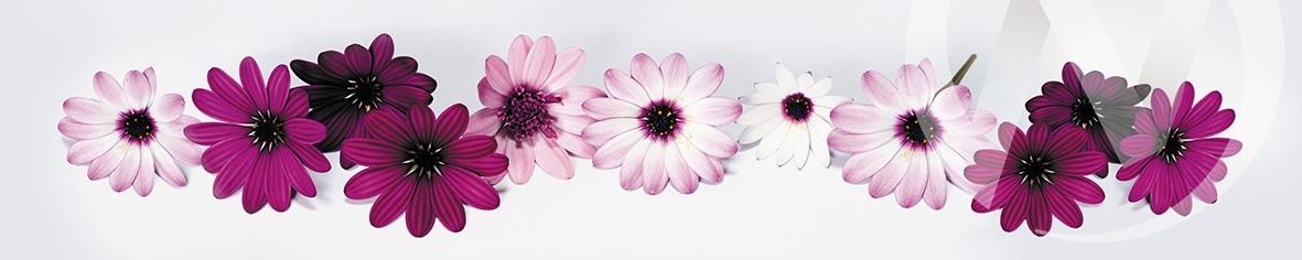Панель декоративная матовая ХДФ 610*2440*3,2 Цветы фф(320)